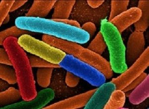 Fast, affordable new test to detect E coli in water
