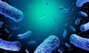 Listeriabacteria