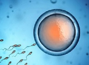 Egg providers changing the way SA thinks about assisted reproduction