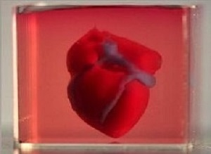 Researchers print 3D heart with some of patient's own cells